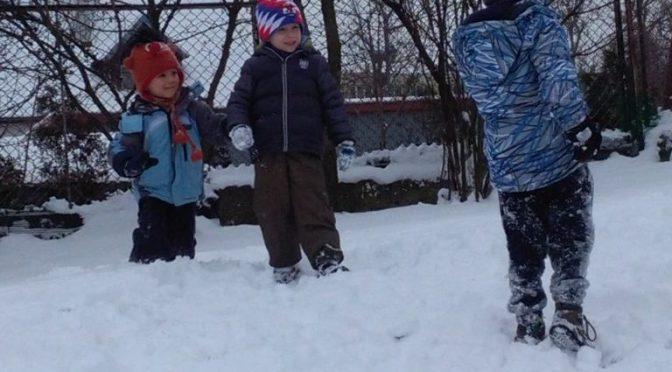Sówki na śniegu