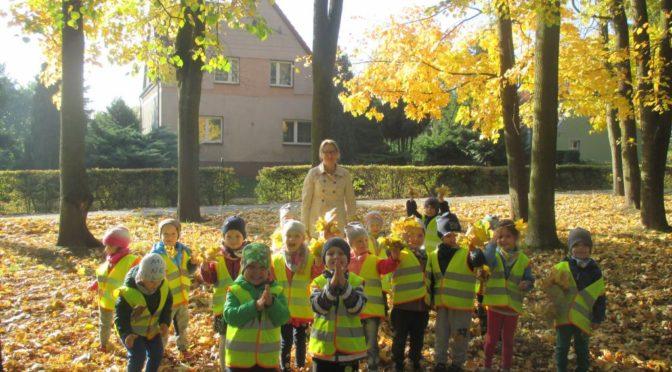 Misie szukają złotej jesieni