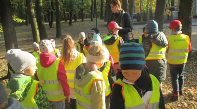 Kangurki z wizytą w parku