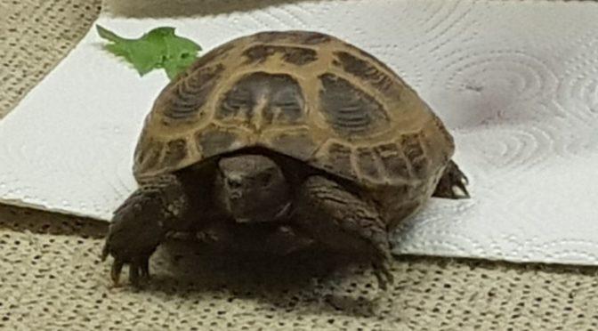 Misie – wizyta żółwia